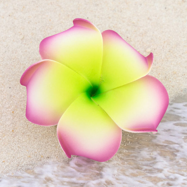 Plumeria flower hair clip 3 inch girlflowers plumeria flower hair clip 3 inch mightylinksfo